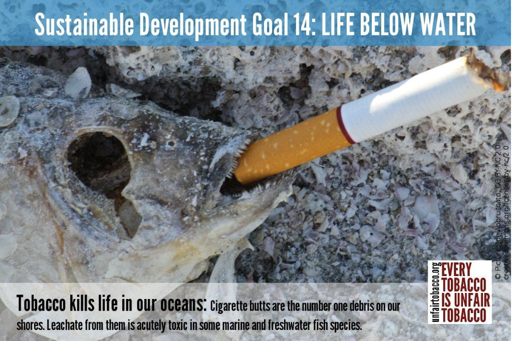 tobacco is like poison to our aquatic family!